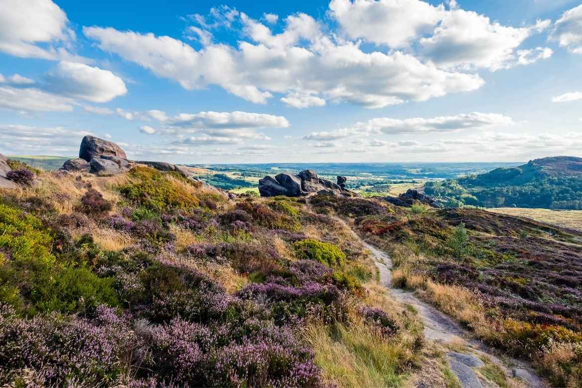 views from the outcrop of rocks called The Roaches surrounded by purple heather in Leek, Peak District